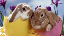 Откъде идват червеното яйце и великденския заек